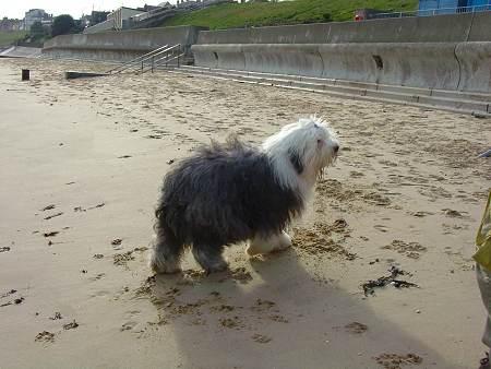 Broer op het strand van Harwich